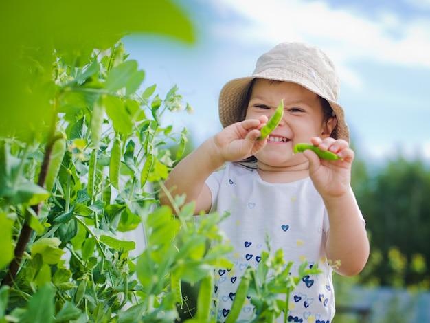 Kind in de tuin verzamelt erwten eten