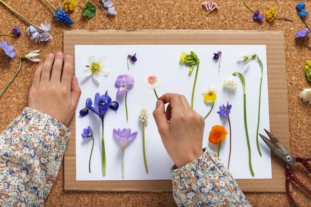Kind maakt een herbarium van verschillende lentebloemen. kinderen onderwijs concept.