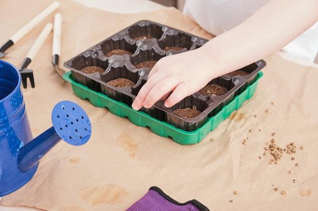 Kind plant zaden in een kleine zaailingenkas, zaailingencontainer met verweesde tabletten, tuinartikelen op tafel