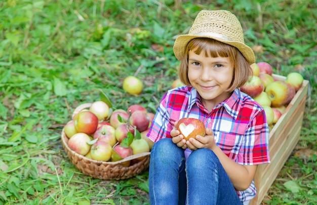 Kind plukt appels in de tuin in de tuin