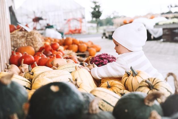 Kind pompoenen plukken op pompoenveld klein peutermeisje dat tussen squash speelt op de boerderijmarkt