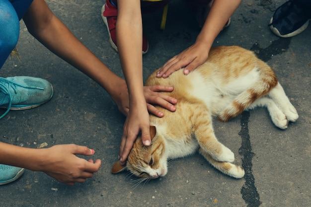 Kinderen aaien een dakloze kat op straat