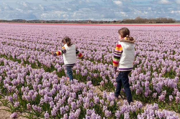 Kinderen die op mooi hyacintgebied spelen in nederland. kleine meisjes plezier in kleurrijke lentebloemen. voorjaarsvakantie