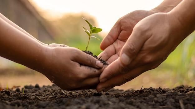 Kinderen en volwassenen werken samen om kleine bomen in de tuin te planten, ideeën te planten om luchtvervuiling of pm2,5 te verminderen en de opwarming van de aarde te verminderen.