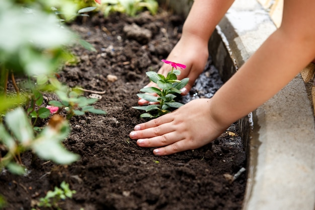 Kinderen handen rond groene jonge bloemplant