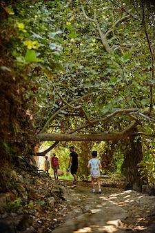 Kinderen in het groene bos spelen