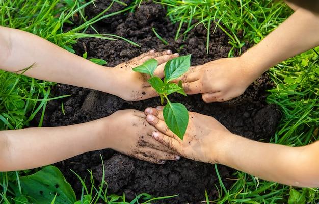 Kinderen planten planten in de tuin. selectieve aandacht.