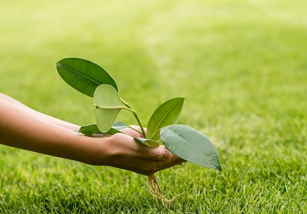 Kinderhanden houden een spruit van een boom vast op een achtergrond van groen gras. zorgen voor het milieu.