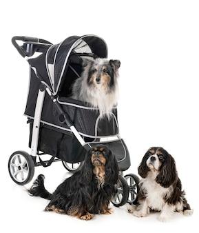 Kinderwagen voor hond