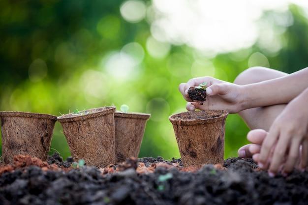 Kindhand die jonge zaailingen in kringloopvezelpotten planten in de tuin