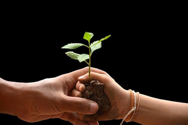 Kindmeisje en ouder die jonge plant in handen samen houden als bewaringswereld
