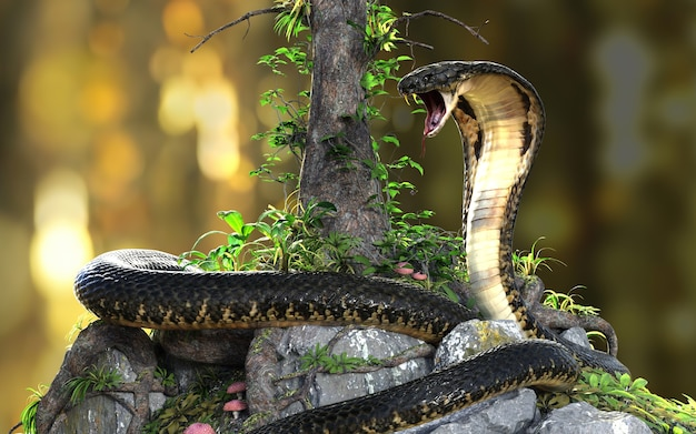 King cobra de langste giftige slang ter wereld in de jungle met uitknippad, king cobra snake