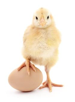 Kip en ei geïsoleerd