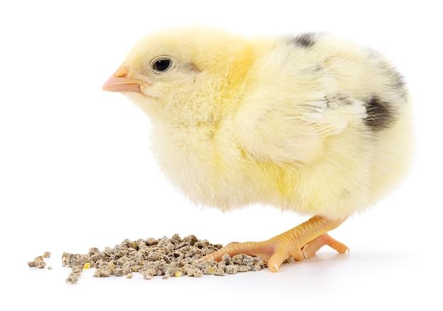 Kip met geïsoleerd voedsel