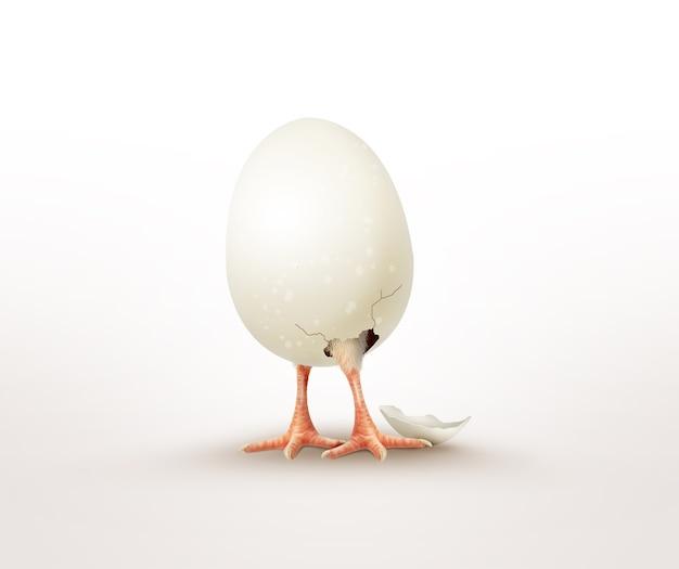 Kip uit een ei gekropen