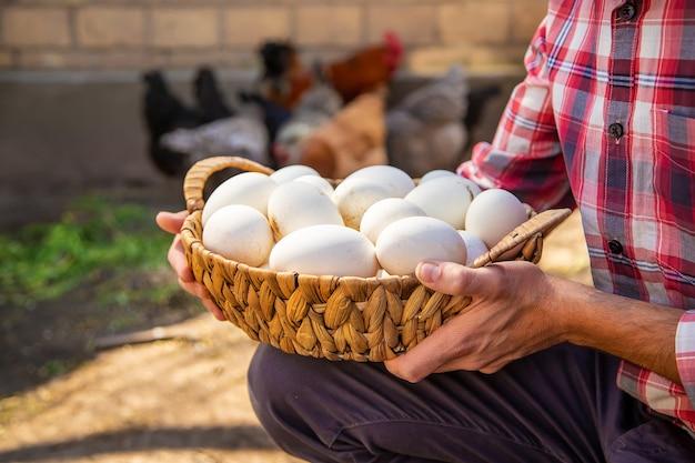 Kippeneieren in de handen van een man