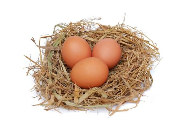 Kippeneieren in het nest geïsoleerd op een witte achtergrond