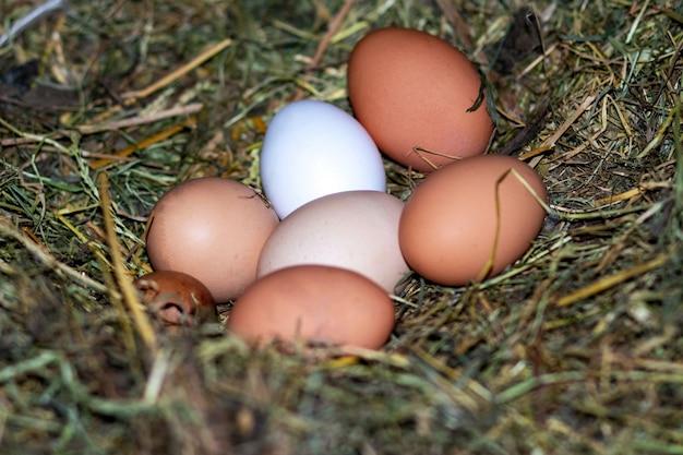 Kippeneieren in het nest kippennest de eieren zijn in het nest