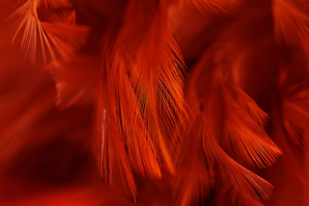Kippenveren in zachte en onscherpe stijl voor de achtergrond
