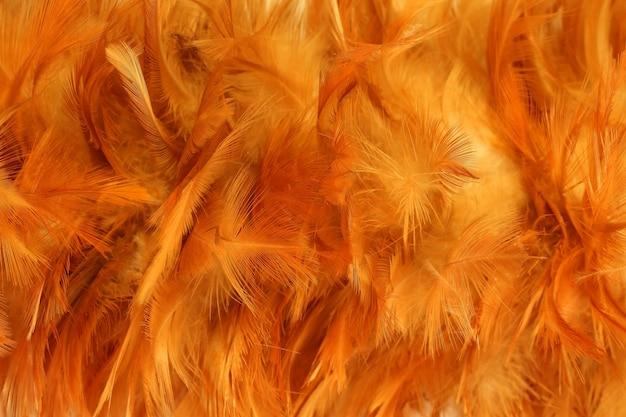 Kippenveren kleur oranje.