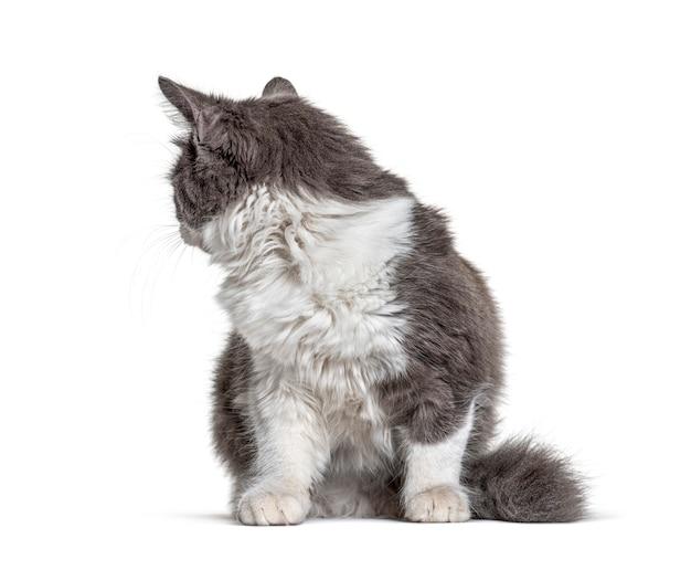 Kitten crossbreed kat zit en kijkt terug looking