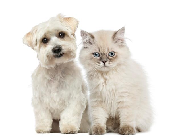 Kitten en hond samen zitten en kijken naar de camera