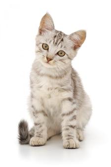 Kitten geïsoleerd