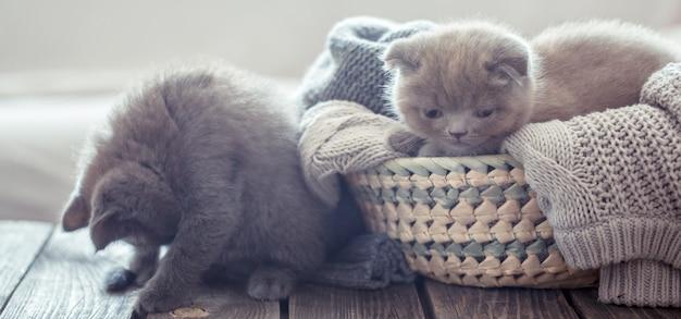 Kitten in de mand