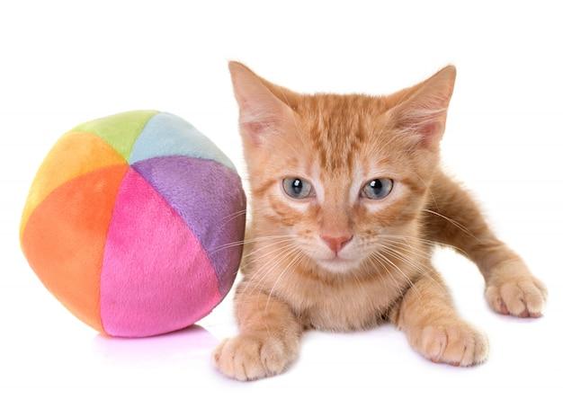 Kitten in de studio