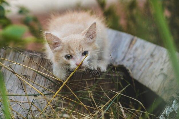 Kitten in de tuin