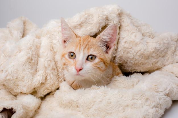 Kitten in een deken gewikkeld
