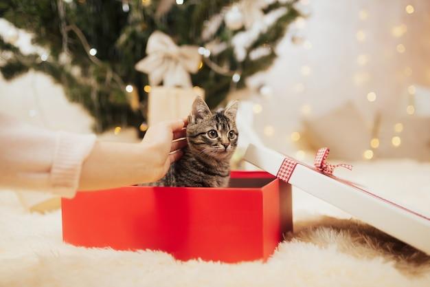 Kitten in een rode geschenkdoos.