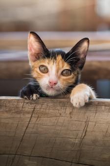 Kitten kat kijk naar de camera
