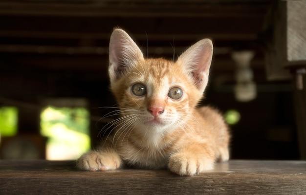 Kitten kat