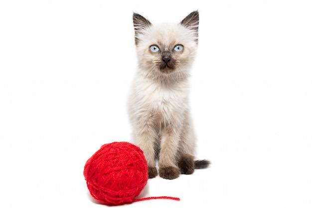 Kitten met bal van wol geïsoleerd