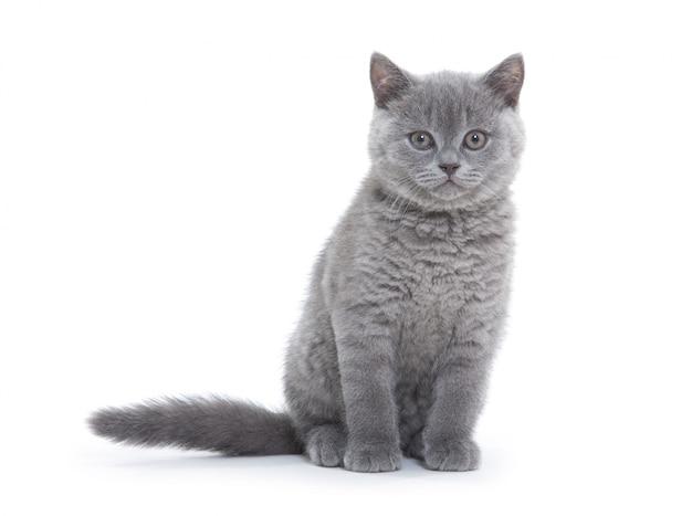 Kitten op wit