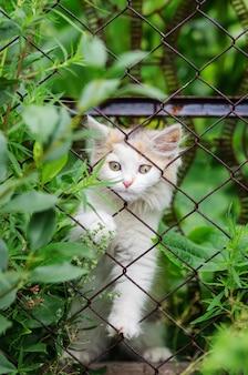 Kitten probeert door het hek van gaas te klimmen