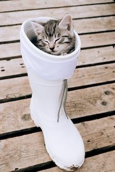 Kitten slaapt in een rubberen laars.