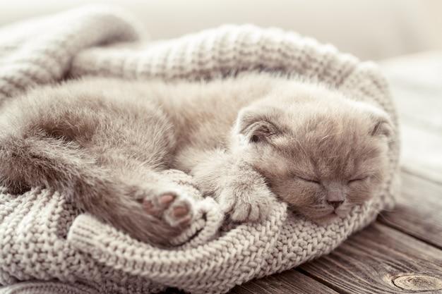 Kitten slaapt op een trui