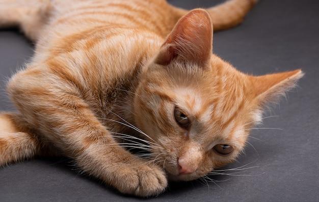 Kitten slaapt op het grijze papier