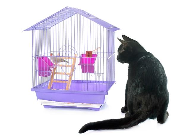 Kitten spelen met vogel