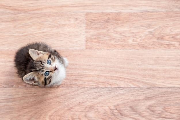 Kitten wachten op eten. kleine gestreepte kat aanbrengen op houten vloer, likken en kijken naar camera