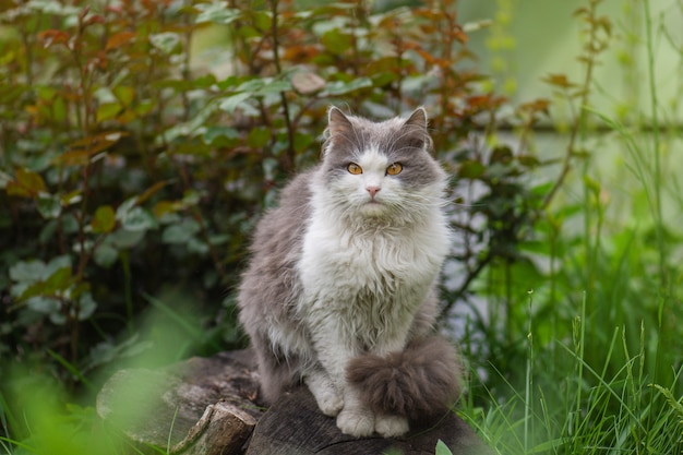 Kitten zit in bloeiende bloemen in een tuin. kat rusten buiten in de zomer. heldere foto van een kat in een tuin