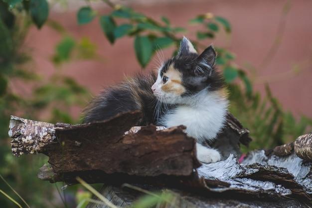 Kitten zit in de tuin van groen gazon. kitten leggen in de natuur