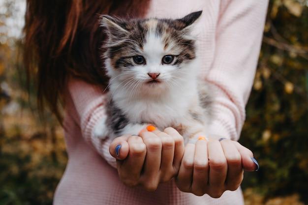 Kitten zittend op handen