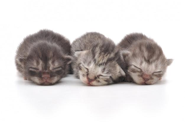 Kittens samen slapen