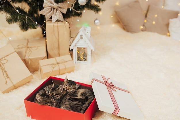 Kittens slapen in een rode geschenkdoos.