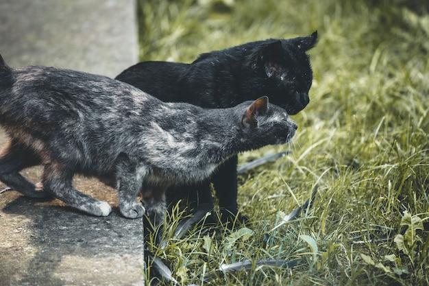 Kittens spelen in de achtertuin van het huis