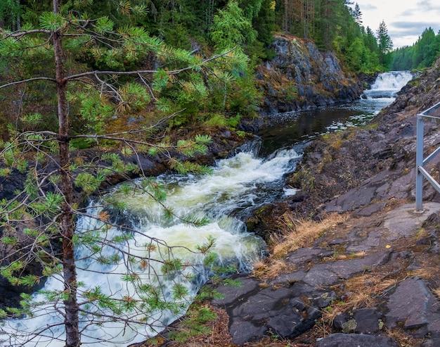 Kivachwaterval in het bos van karelië. russisch landschap in de zomer