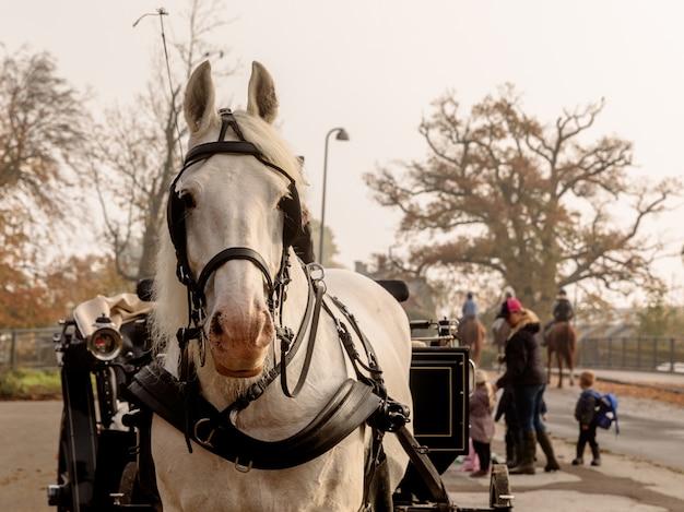 Klampenborg, denemarken - 15 oktober 2018: mooi wit paard met harnas en rijtuig, wachtend op enkele toeristen buiten de rode poort naar jaegersborg dyrehave dicht bij kopenhagen.
